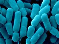 Tonsils & Bacteria